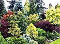 СЕЯНЦЫ. Декоративные деревья и кустарники