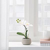 ФЕЙКА Искусственное растение и кашпо, д/дома/улицы, Орхидея белый, 7 см, фото 1
