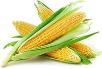 Семена кукурузы Pioneer PR31G98