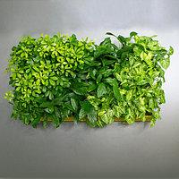 Фитокартина из живых растений с автополивом