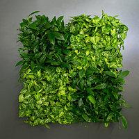 Фитокартина из живых растений с ручным поливом
