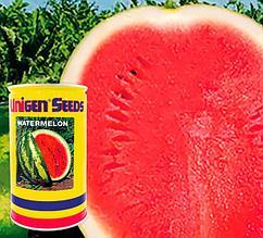 Семена арбуза Кримсон Свит - Crimson Sweet