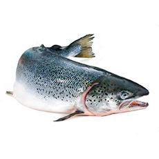 Рыба свежая и охлажденная
