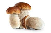Белые грибы замороженные, 4-6 см