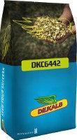 """DKC 6442  """"Monsanto"""" (DEKALB)"""