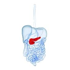 препараты для поджелудочной железы