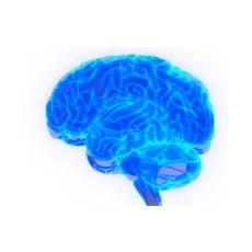нервная система, общее