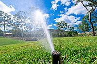 Система полива для деревьев