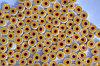 Стеклянные пластины MILLEFIORI COE104, 023 d=5-6мм., 100г.