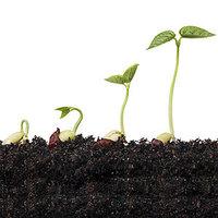 Как подготовить семена к высадке и ничего не забыть?