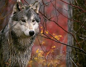 """Картины стразами на подрамнике """"Волк на охоте в лесу"""" 30х40 см СТРАЗЫ КРУГЛЫЕ"""