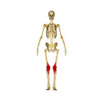 Препараты для лечения суставов и костей