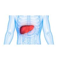 Препараты для лечения желчного пузыря и печени