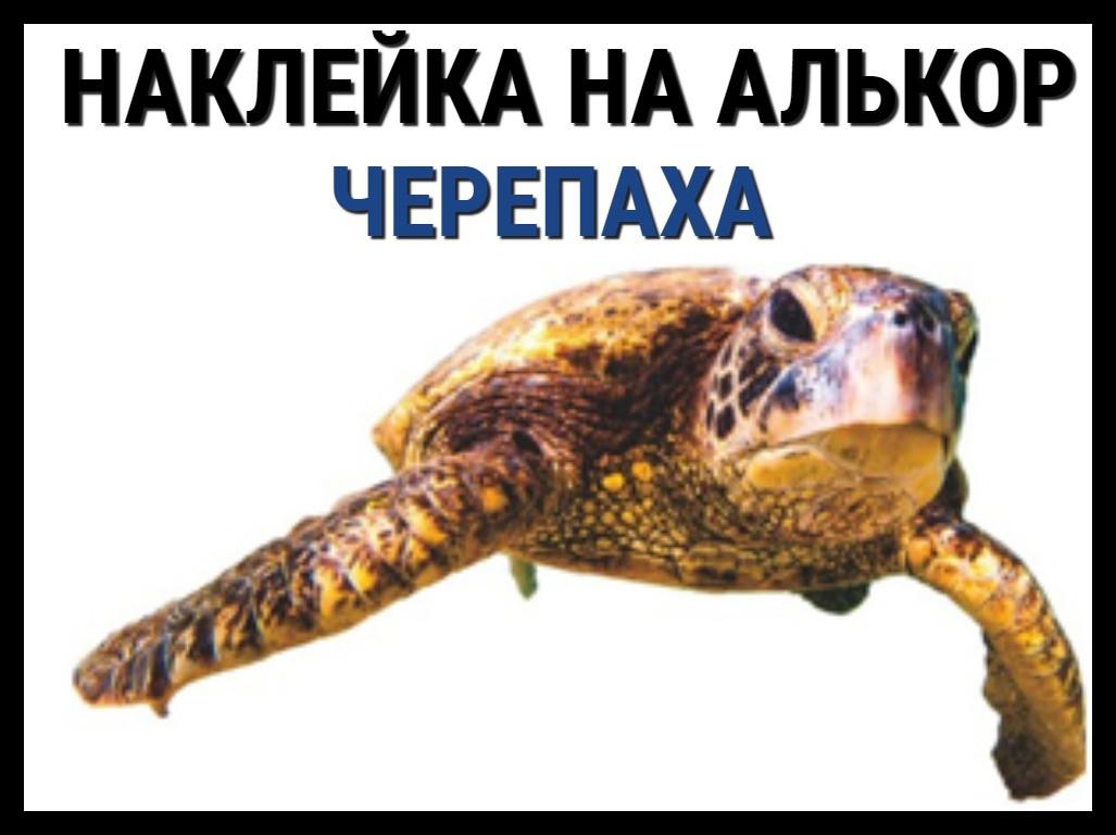 Наклейка Черепаха на алькорплан ( ПВХ пленка)