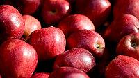 """Яблоко красное. Сорт """"Превосход"""" 1 кг"""