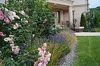 Посадочный материал для проекта сад у подножия Коктобе