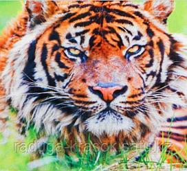 """Картины стразами на подрамнике """"Тигр в траве"""" 30х40 см  СТРАЗЫ КРУГЛЫЕ"""