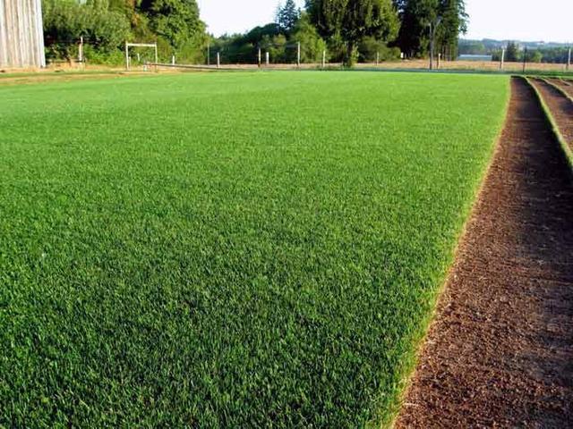 Укладка газонной травы заказть