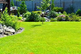 Посев газонной травы на участке заказать