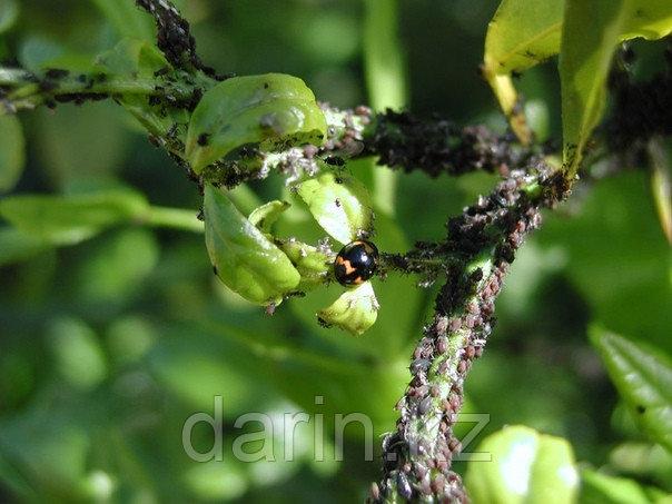 Инсектицид Би 58 50мл - фото 2