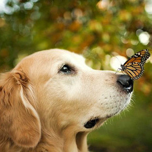 домашние животные и насекомые