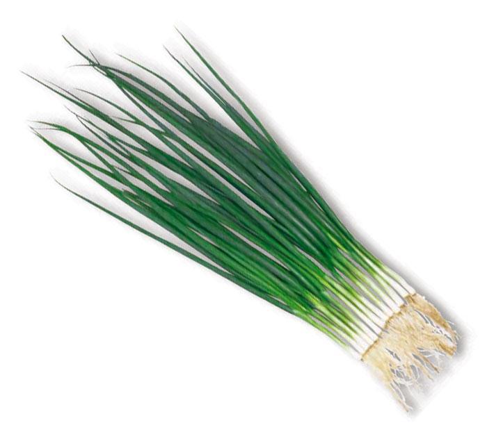 Семена лука Тотем - Totem