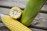 Семена сахарной кукурузы Стронгстар F1