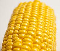 Семена сахарной кукурузы Тайсон F1