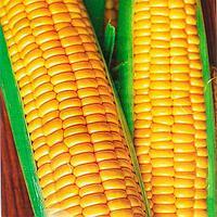 Семена сахарной кукурузы Шайнрок