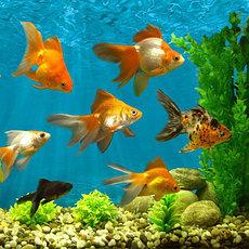 Рыбы аквариумные