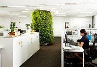 Озеленение офиса и производственных  помещений