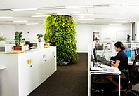 Озеленение офиса и офисных помещений искусственными растениями