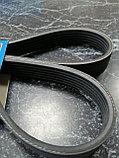 Ремень приводной ГУРа, кондиционера, генератора MITSUBISHI ASX GA2W 2011-2013, SKF, фото 2