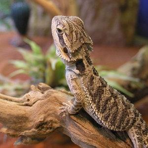экзотические животные и рептилии