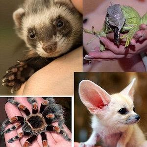домашние животные и насекомые, общее