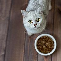 Корма для кошек и котов