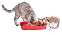 Наполнители кошачьих туалетов, ликвидаторы запаха