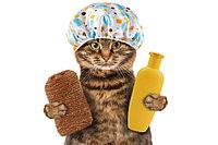 Гигиена, уход и коррекция поведения для кошек