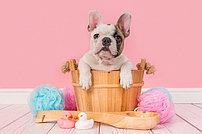 Шампуни, Грумминг и пр. Средства по уходу для собак