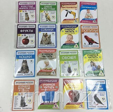 Обучающие карточки по методике Глена Домана, фото 2