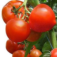 Семена Томатов для пленочных теплиц (индетерминантные) Агилис F1