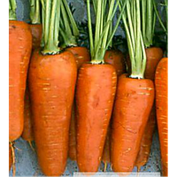 Семена Моркови Проминанс F1 (2,2-2,4)