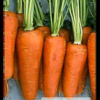 Семена морковки Проминанс F1 (1,6-1,8) (100000 шт)