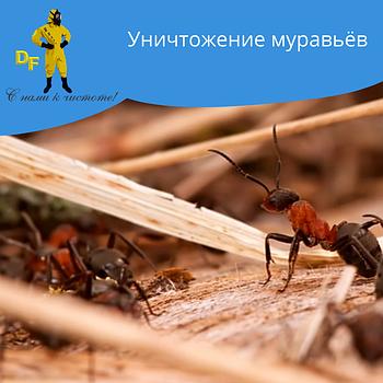 Уничтожение чешуйниц муравьев дезинсекция без запаха