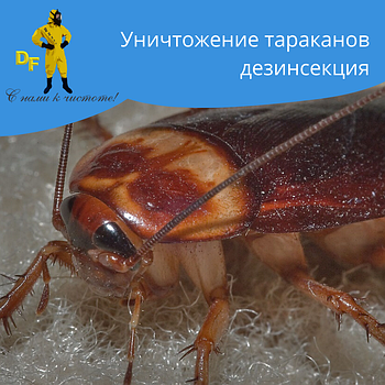 Уничтожение тараканов дезинсекция