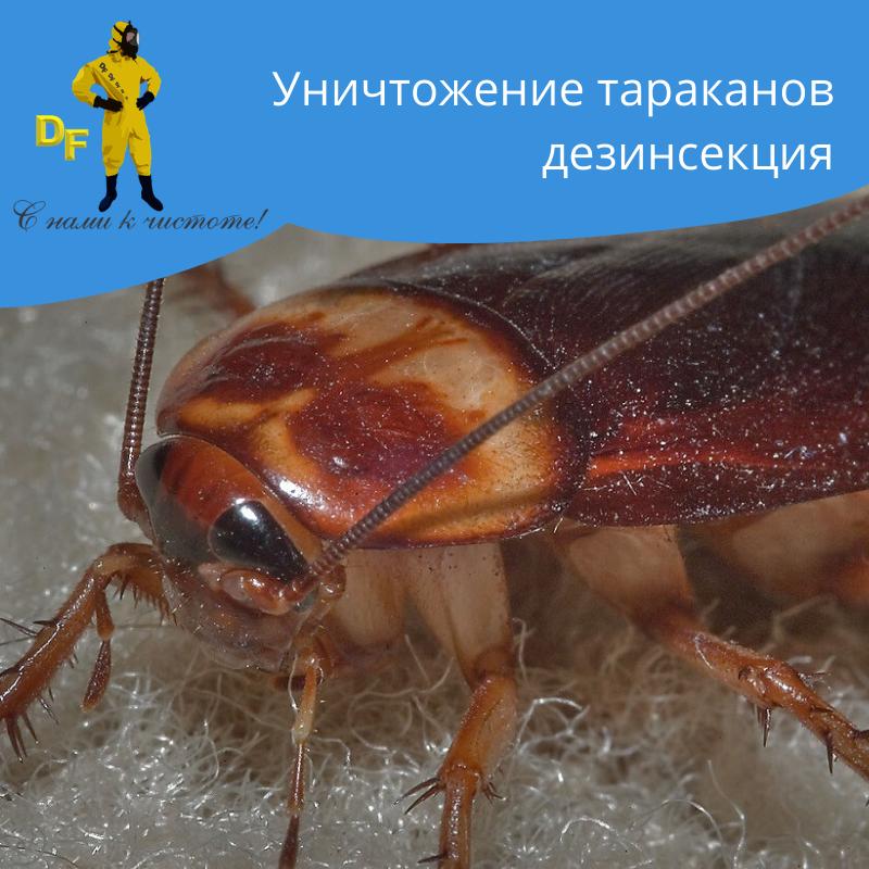 Уничтожение тараканов дезинсекция - фото 1