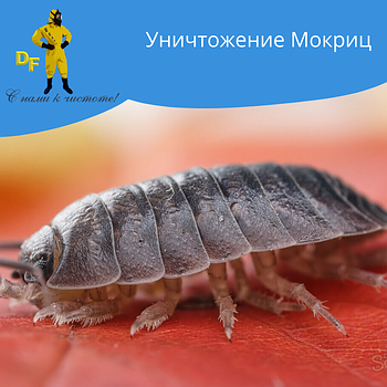 Уничтожение насекомых «Мокриц»