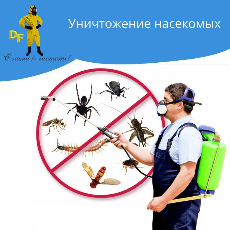 Уничтожение тараканов и других насекомых без запаха