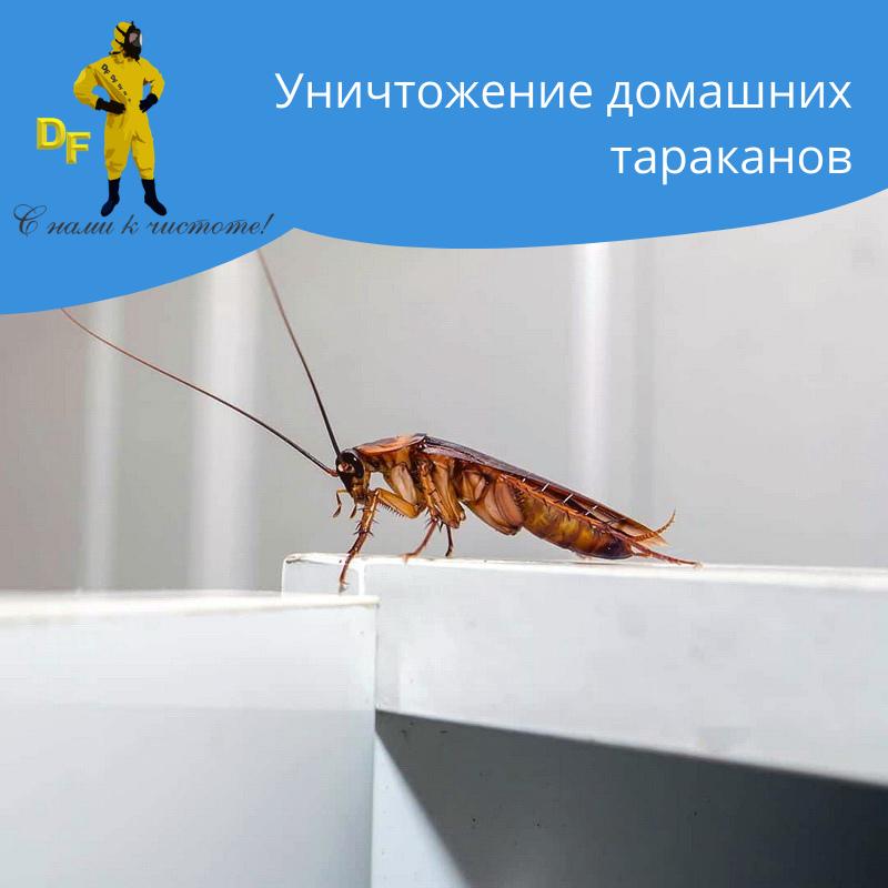 Уничтожение тараканов в 1 комнатной квартире