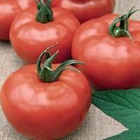 Семена розово плодного томата Шибик 500 сем